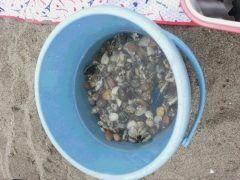 横浜市の海の公園は横浜の中で唯一海水浴場を持つ公園なんです バーベキュー場ボードセーリングがあるんですが干潟にはアサリなど多くの貝類が生息しているため潮干狩りなどが楽しめます 今年のGWはここに行ってみて  tags[神奈川県]