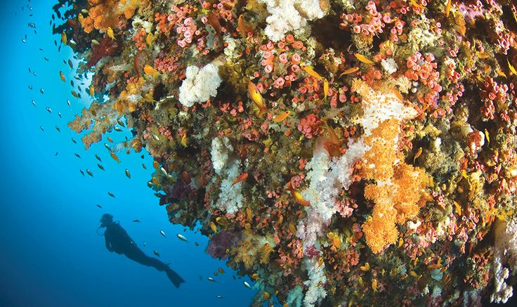 Bunter Korallengarten DESROCHES ISLAND 5* │ SEYCHELLEN