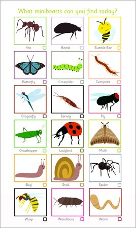 Minibeast Spotter Sheet...Decorative minibeast spotter sheet ideal to encourage outdoor play and investigation. Features pictures of 18 minibeasts with a little box underneath for children to tick. #insects #minibeasts
