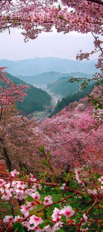 Portofolio Fotografi Pemandangan - Sakura in Spring Japan  #PHOTOGRAPHICSCENERY