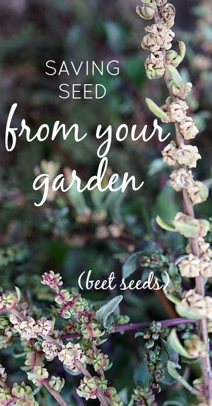 Saving seeds from your prolific garden is by far the most economical way to go, and can be very easy if you know and follow these basic ground rules.
