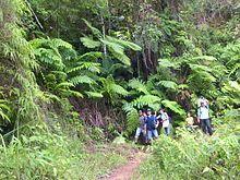 Sierra Maestra [Cuba] helechos arborescentes