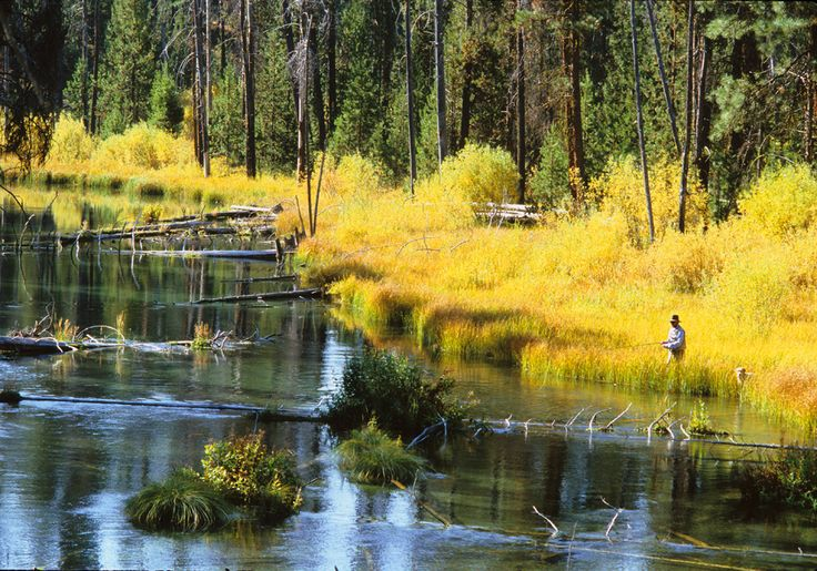 Best 25 fall river ideas on pinterest fall scenery for Best fishing spots in colorado