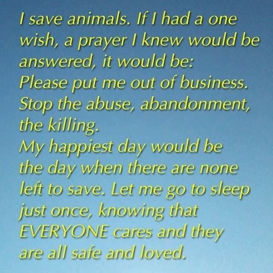 Examples and explanations on how to stop killing in animal shelters?