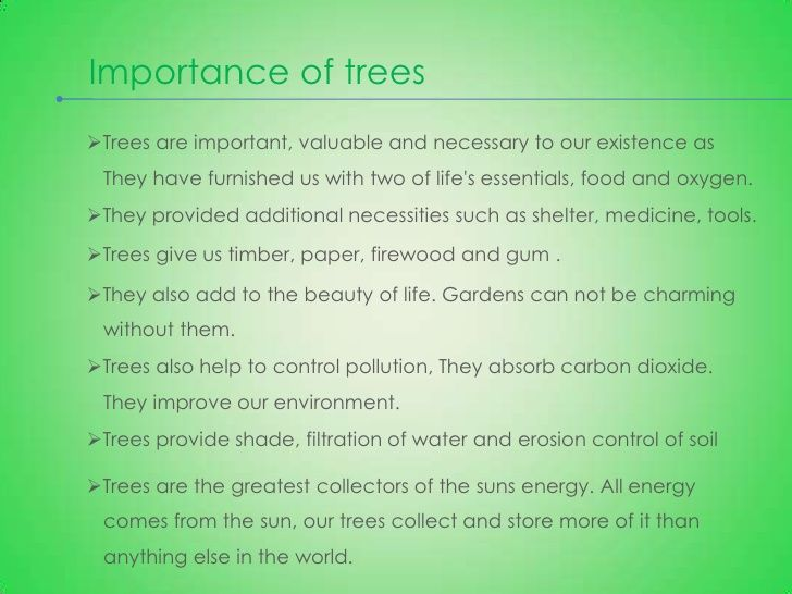 the best tree essay ideas argumentative essay  save our trees essay best opinion