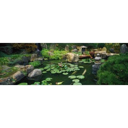 Lilies in a pond at Japanese Garden University of California Los Angeles California USA Canvas Art - Panoramic Images (36 x 12)