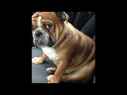 Compilatie van #grappige foto's #honden