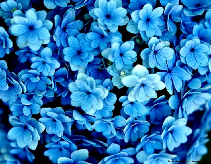Group of Dark Blue Flowers Background - blue flower backgrounds