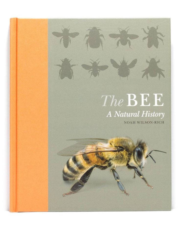 """The Bee a Natural History"" by Noah Wilson-Rich is a beautiful book covering the human-bee relationship over time; bee identification; bee evolution..."