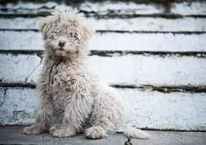 Accessories You Need Before Bringing Puppy HomeCutest Baby, Happy Mondays, Dogs Pics, Sweets, Cutest Dogs, Pets, New Puppies, Fuzzy Wuzzy, Animal