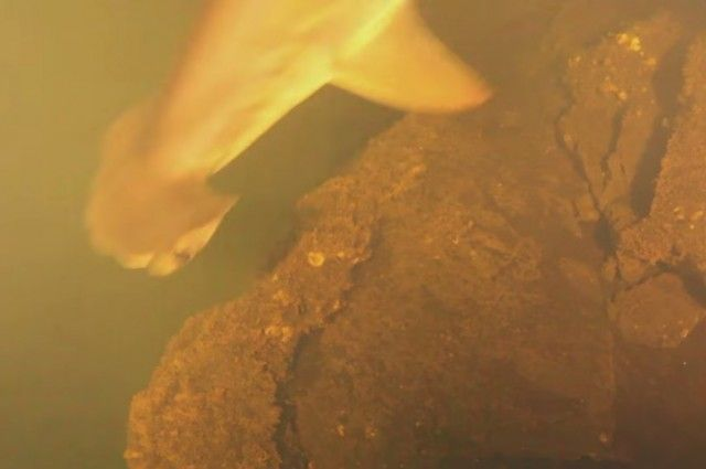 Scientists Baffled To Find Sharks Living Inside An Active Volcano | IFLScience