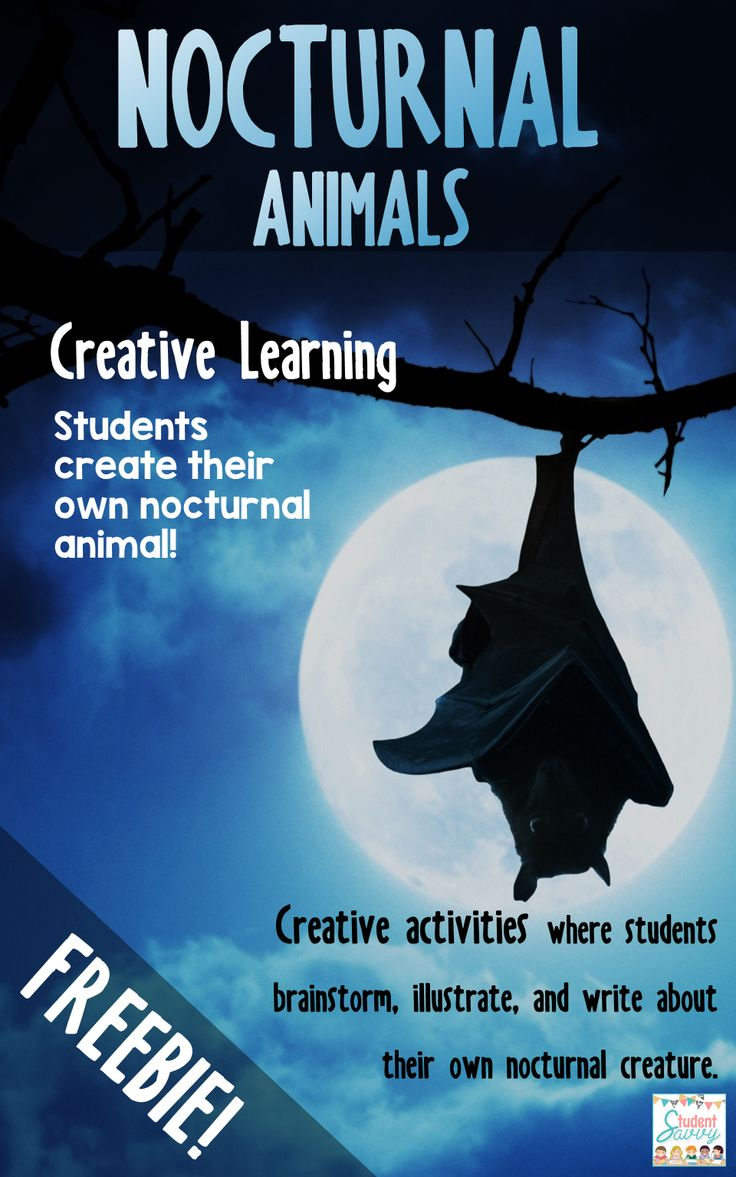 Nocturnal Animals – Creative Writing Freebie