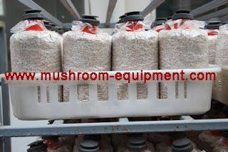 mushroom equipment,mushroom equipment,growing mushrooms indoors: Hot sale mushroom plastic bags ,mushroom cultivati...