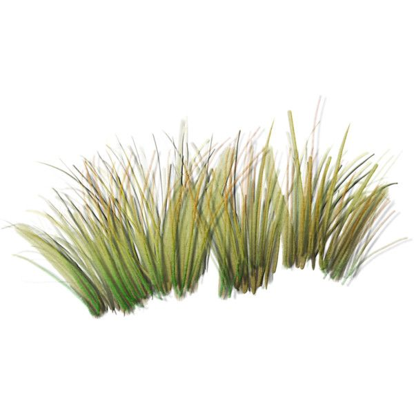 sand grass clumps 2.png liked on Polyvore featuring grass ...