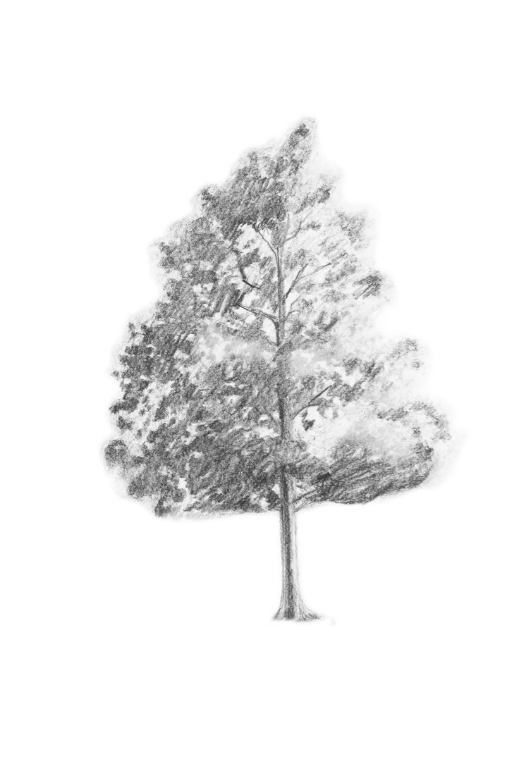 76 best how to draw realistic trees plants bushes and for Best tree drawing