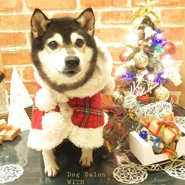 姫ちゃん🎄とっても可愛いコートを着てご来店くださいました✨😄赤チェックでクリスマス感と可愛さアップですね✌️😍🎉 #しばいぬ #柴犬#黒柴犬 #shiba #クリスマスコーデ#犬#いぬ#トリミングサロン #ドッグサロン #trimming #grooming #dog #ふわもこ部 #いぬら部 #いぬばか部 #いぬすたぐらむ #クリスマス#ワイヤークラフト #トナカイ#手作り#handmade#撮影セット#粘土 #merrychristmas #christmas#新宿#東京#dogsalonwith