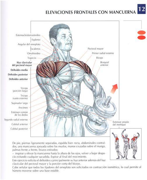 Las 25 mejores ideas sobre entrenamiento con mancuernas for Ejercicios de gym