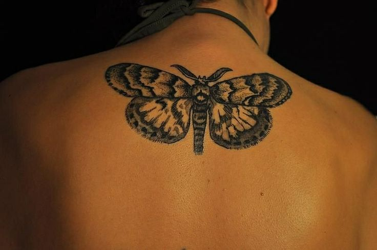 101 Best Images About Butterfly/Moth Tattoos On Pinterest