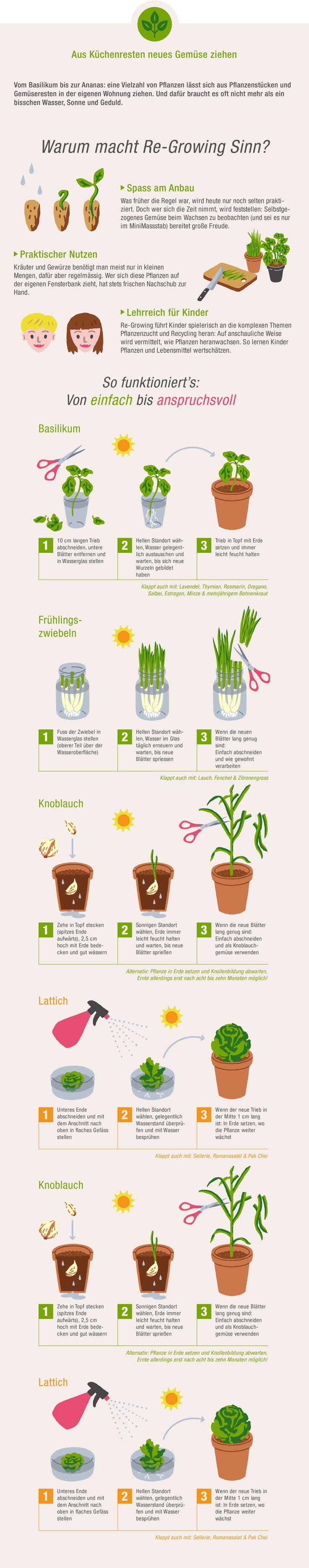 Infografik aus Küchenresten neue Pflanzen ziehen