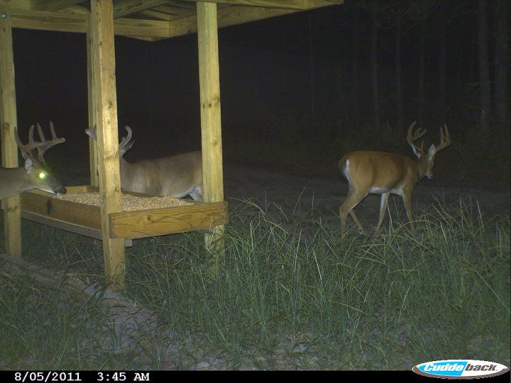 Deer Hunting: How to Find Trophy Whitetails