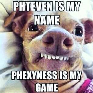 17 Best images about Tuna the dog as Phteven!! on ... - photo#24