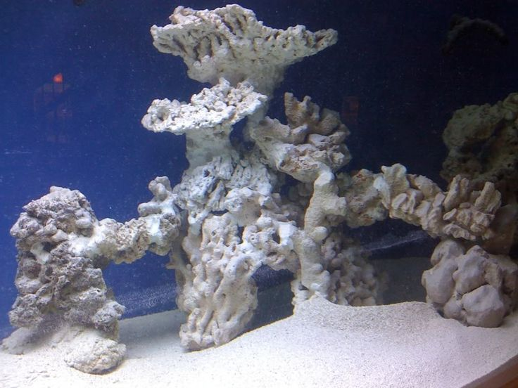 Aquascaping, Show your Skills... - Page 16 - Reef Central Online Community