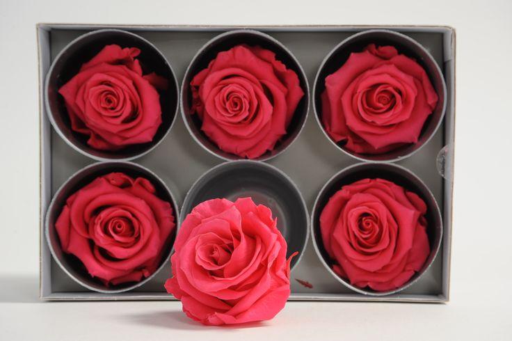 rose stabilizzate di alta qualità durata oltre 2 anni bellissime adatte a composizioni floreali non necessitano di irrigazione  e luce