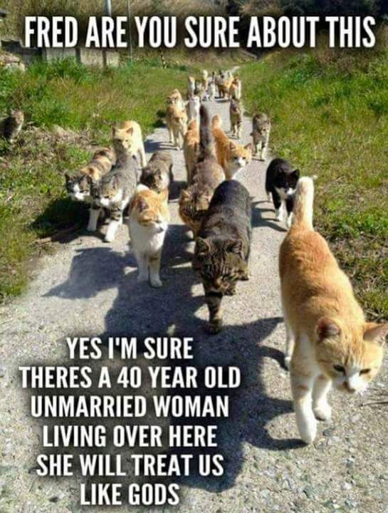 Image result for meme of a group of cats with caption single middle aged woman lives over here