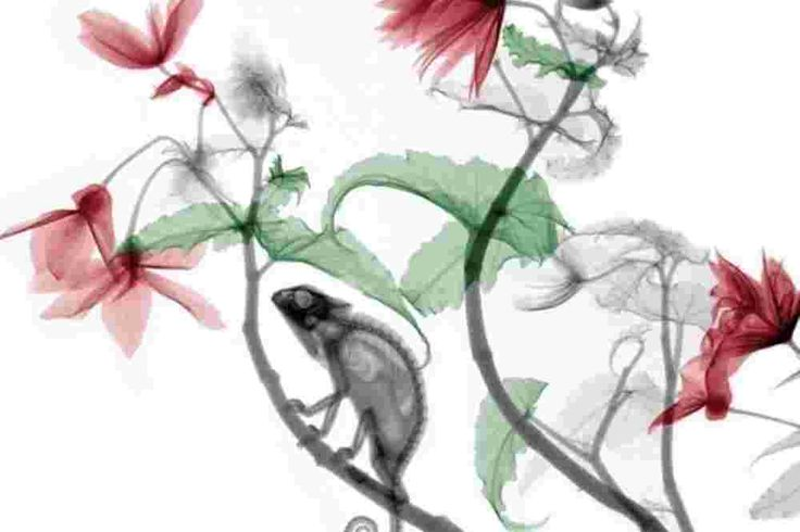 Der niederländische Physiker Arie van't Riet hat mit weichen Röntgenstrahlen und Photoshop Flora und Fauna eindrucksvoll in Szene gesetzt.