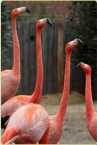 zoo animals: earthquake predictions