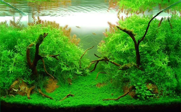 Ikea Grundtal Countertop Lighting ~   aqua details nature aquarium therapy aquarium ideas 60p aquascape