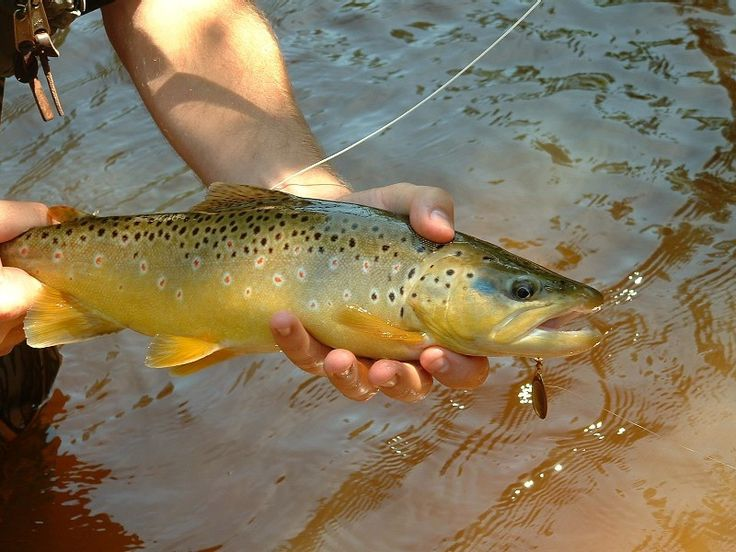 Best 20 trout fishing tips ideas on pinterest for Fly fishing techniques