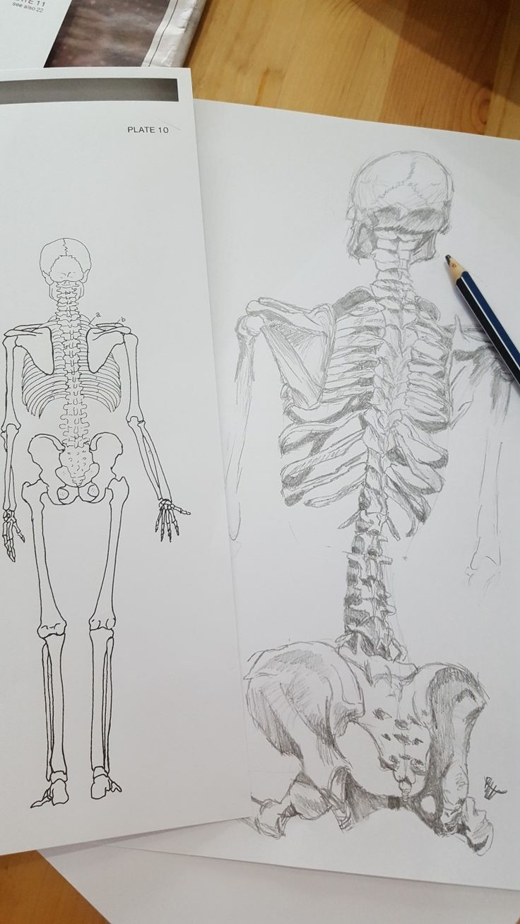 Just did some anatomy study while I had some free time. By Bonnie Leggett