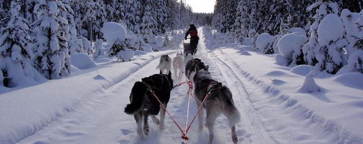 Ein Abenteuer mit Huskies: 200km durch Karelien - Abenteuer an der Grenze zu Russland - Finnland - Hundeschlitten