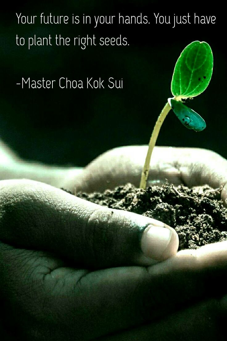 """""""Your future is in your hand's. You just have to plant the right seeds!""""        ~Master Chao Kok Sui~"""
