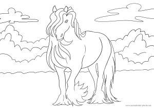 Ausmalbild Pferd Nr. 9 Mehr