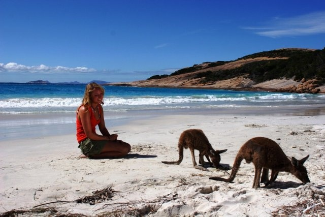 Kangaroos on the beach, Esperance, Western Australia