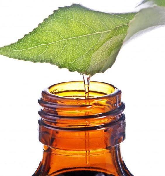I poteri dell'olio di tea tree: 45 modi per utilizzarlo - Ambiente Bio: