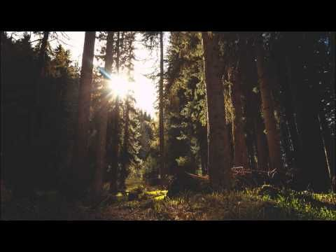 The Forest Awakes - The Beautiful Sounds of Birds in the Morning