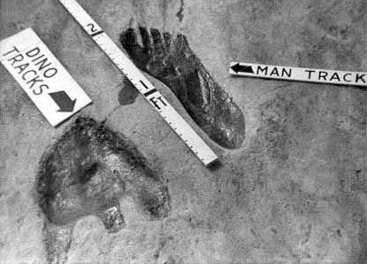 coexisting dinosaur & human prints | ... fossil trackshttp://creation.com/human-and-dinosaur-fossil-footprints