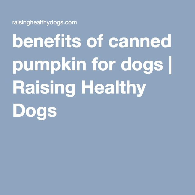 benefits of canned pumpkin for dogs | Raising Healthy Dogs