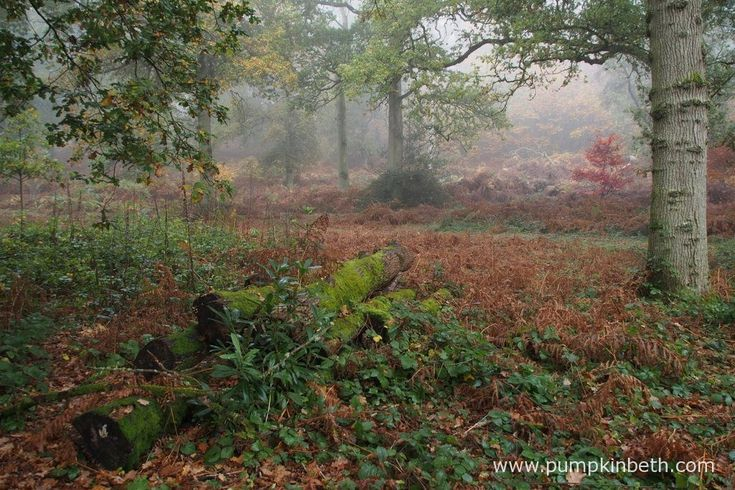 Leaving a log pile in a quiet area of your garden, will create a habitat for many invertebrates, insects, frogs, toads, hedgehogs and other creatures. Many of us have small areas to garden in, but it's easy to create a woodpile in a quiet corner and leave a pile of autumn leaves for hedgehogs to safely nest in.
