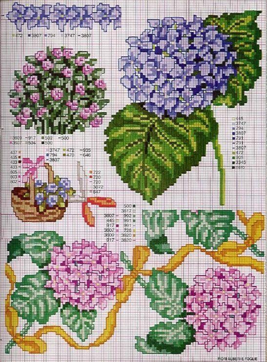 (4) Gallery.ru / Fotoğraf # 1 - Botanik Çiçek - irislena