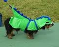 Dog Halloween Costumes - Dachshund Dressed as a Snap Dragon
