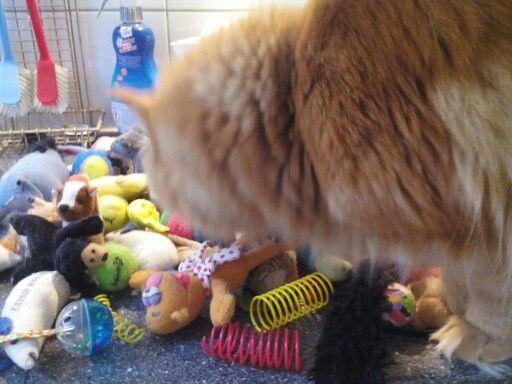 Justy helpt zijn speeltjes opruimen.