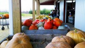 pumpkin season info for Columbus Ohio via Experience Columbus