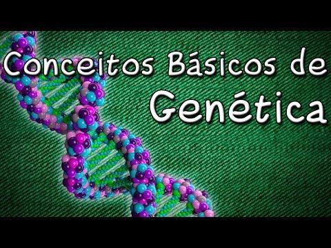 Genética Princípios Básicos - Genótipo Fenótipo Gene Dominante e Recessivo - Aula Grátis Biologia - YouTube