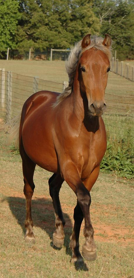 If I had a horse like him, I'd call him Tsornin. Anyone know what the significance of the name is?