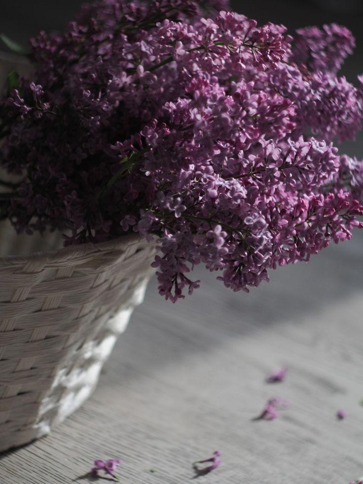 #сирень #весна #цветение