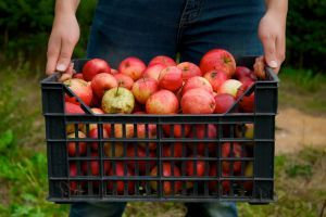 Get ready to partake in one of Fall's most fun things to do - Apple Picking! Find out where you can go to pick your own this Autumn right here on Long Island!